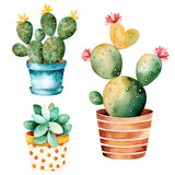 Planta pintada a mano del cactus de la acuarela y planta suculenta en pote Imagen de archivo libre de regalías