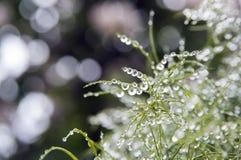 Planta por completo de las gotas de lluvia en jardín fotos de archivo libres de regalías