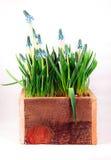 Planta Potted Fotografía de archivo libre de regalías