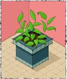 Planta Potted Imagen de archivo libre de regalías