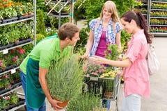 Planta potted da oferta do vendedor do centro de jardim fotografia de stock royalty free