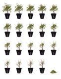 Planta Potted en curso stock de ilustración