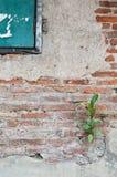 Planta pouca árvore Imagem de Stock Royalty Free