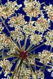 Planta presionada Fotografía de archivo libre de regalías
