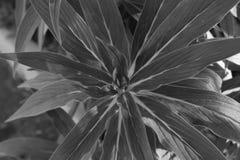 Planta preto e branco Fotos de Stock