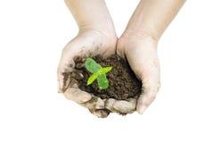 Planta que crece con el suelo entre las manos de la mujer Imágenes de archivo libres de regalías
