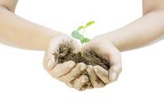 Planta que crece con el suelo entre las manos de la mujer Imagen de archivo libre de regalías