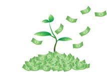 Planta que crece del dinero Fotos de archivo