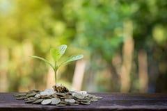 Planta que crece del dinero Concepto de inversión financiera Imagen de archivo