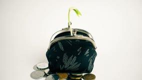 Planta que crece del monedero, concepto del crecimiento de las finanzas del negocio de dinero, aislado en blanco almacen de metraje de vídeo