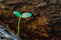 Planta que crece en árbol imagen de archivo libre de regalías