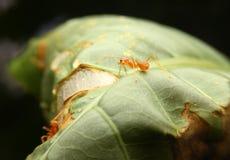 Planta que crece en dren del agua imágenes de archivo libres de regalías