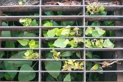 Planta que crece en dren del agua fotos de archivo libres de regalías