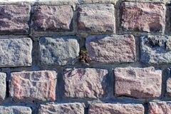 Planta que crece en la pared de piedra Imagenes de archivo