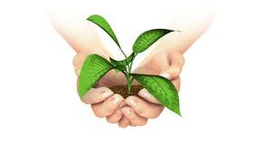 Planta que crece en manos stock de ilustración