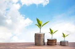 Planta que crece en monedas de los ahorros Gráfico cada vez mayor de la pila de la moneda del dinero Fondo del cielo azul Imágenes de archivo libres de regalías