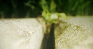 Planta que crece entre dos piedras Opinión macra de FPV Tirado en c?mara ROJA almacen de metraje de vídeo