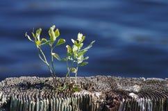 Planta que crece fuera de muelle viejo del canal Imagen de archivo libre de regalías