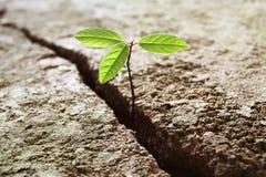 Planta que crece fuera del concreto Foto de archivo