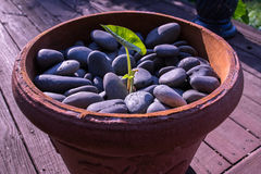 Planta que cresce através das pedras Fotos de Stock Royalty Free
