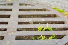 Planta que cresce através do portal da chuva Esforço para que a vida e a vontade sobreviva ao conceito fotos de stock royalty free