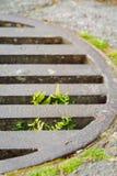 Planta que cresce através do portal da chuva Esforço para que a vida e a vontade sobreviva ao conceito imagens de stock royalty free