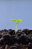 a planta que cresce da terra, conceito da plântula para o negócio cresce Fotos de Stock Royalty Free