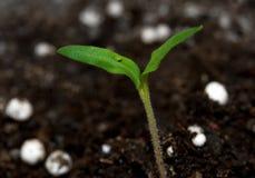 Planta que cresce do solo foto de stock