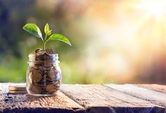 Planta que cresce em moedas das economias Foto de Stock