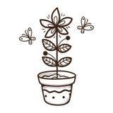 Planta que cresce em um potenciômetro Imagem de Stock