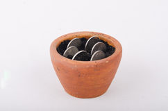 Planta que cresce fora das moedas isoladas no branco Foto de Stock Royalty Free