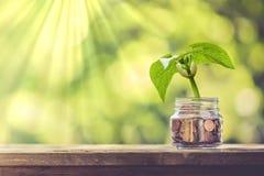 Planta que cresce fora das moedas fotografia de stock royalty free