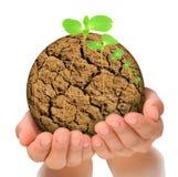 Planta que cresce fora do planeta parched nas mãos fotos de stock