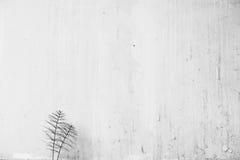 Planta que cresce na frente da parede Fotos de Stock Royalty Free