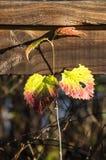 Planta que cresce na frente dos trilhos Foto de Stock