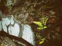 Planta que cresce na parede imagem de stock