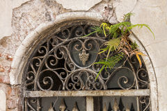 Planta que cresce na porta do ferro Imagens de Stock Royalty Free