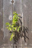 Planta que echa una sombra en una cerca Imagen de archivo libre de regalías