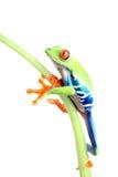 Planta que sube de la rana aislada en blanco fotos de archivo libres de regalías