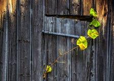 Planta que sube en el edificio Fotografía de archivo libre de regalías