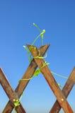 planta que sube en fondo del cielo azul Foto de archivo libre de regalías