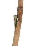 Planta que transplanta e que brota Foto de Stock Royalty Free