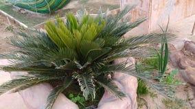 Planta rara en la tierra Fotografía de archivo libre de regalías