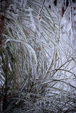 Planta revestida del hielo Fotografía de archivo
