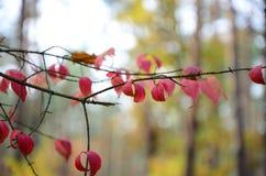 Planta roja Imagenes de archivo