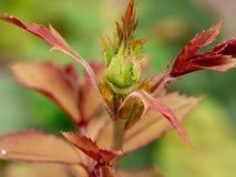 Planta roja Foto de archivo libre de regalías