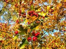 Planta roja Fotografía de archivo libre de regalías