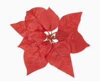 Planta roja de la Navidad Fotos de archivo