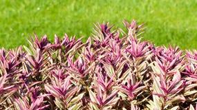 Planta roja del fondo con la hierba Foto de archivo libre de regalías