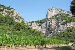 Planta roja francesa de las uvas de vino de AOC, nueva cosecha de la uva de vino en el ámbito o el viñedo Dentelles de Francia, d imagenes de archivo